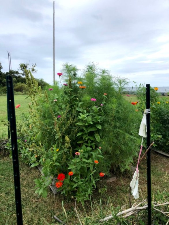 Summer flower garden 1