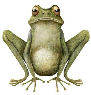 0faeb710f0778c14843a24f2546e8a53-funny-frogs-frog-art